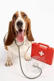 BIllede foredrag forstehjaelp til hund